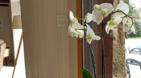 orchidee-gite-atlantique-domaine-des-trois-rivieres-merlevenez